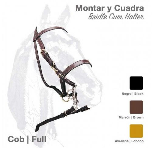 Special offer combination bridle/headcollar